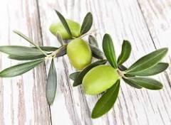 Health benefits of olive leaf