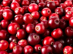Cranberry and women's health