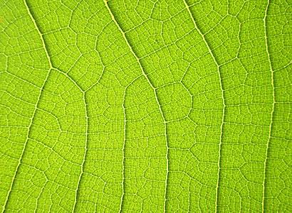 Health benefits of chlorophyll and spirulina