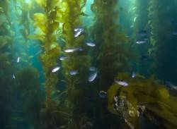 What Is Kelp & What Benefits Can It Offer?