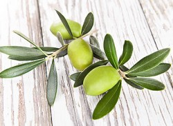 Health benefits of olive leaf